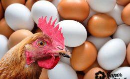 Ovo de Galinha: Benefícios e a Polêmica do Colesterol