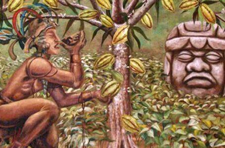 História do Cacau e Chocolate