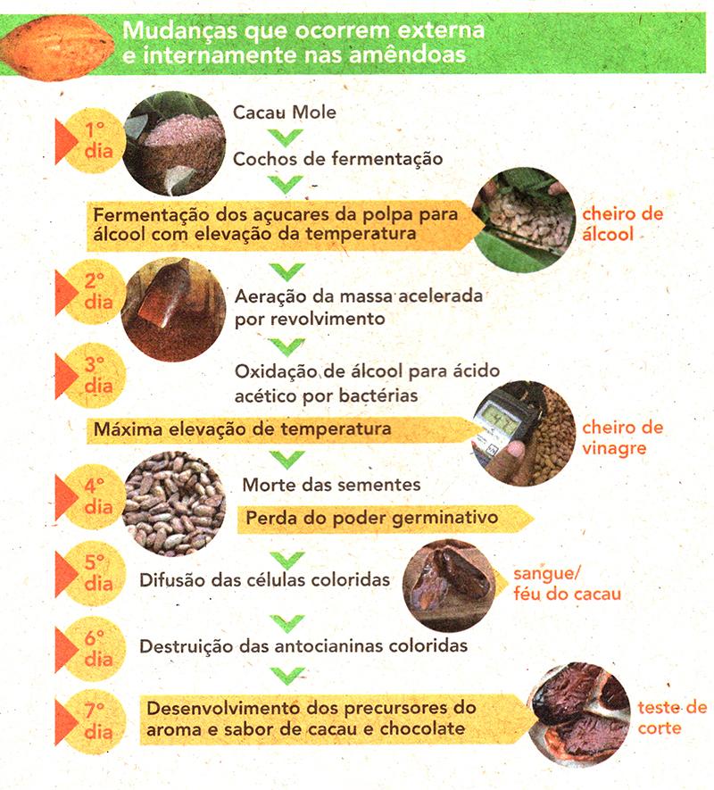 As etapas da fermentação do cacau